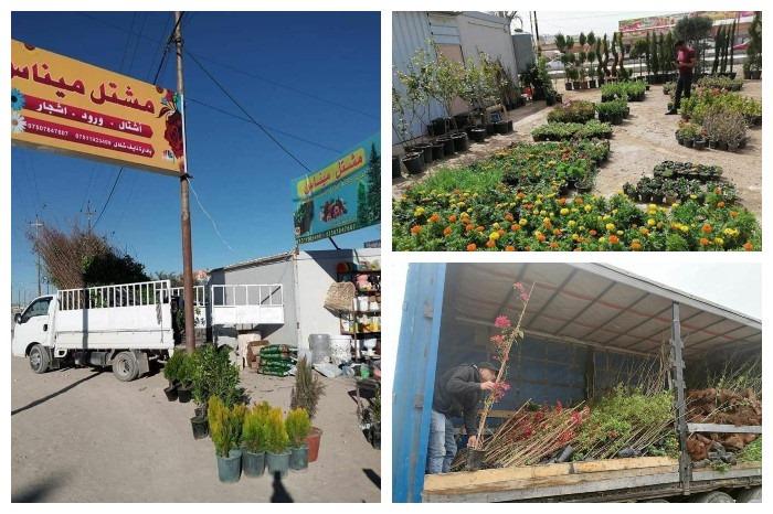 Florists return to Sinjar